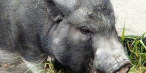 黒豚ブラザーズのイメージ